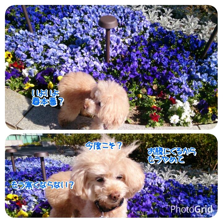 20160329155345051.jpg