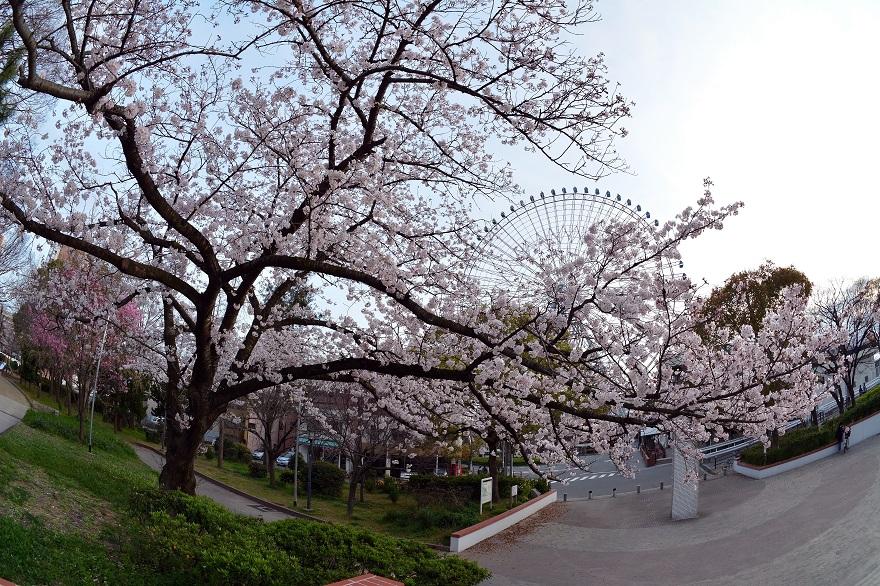 春の天保山公園 (1)