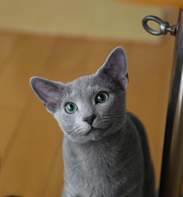 テオ可愛い