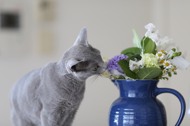 アンとお花