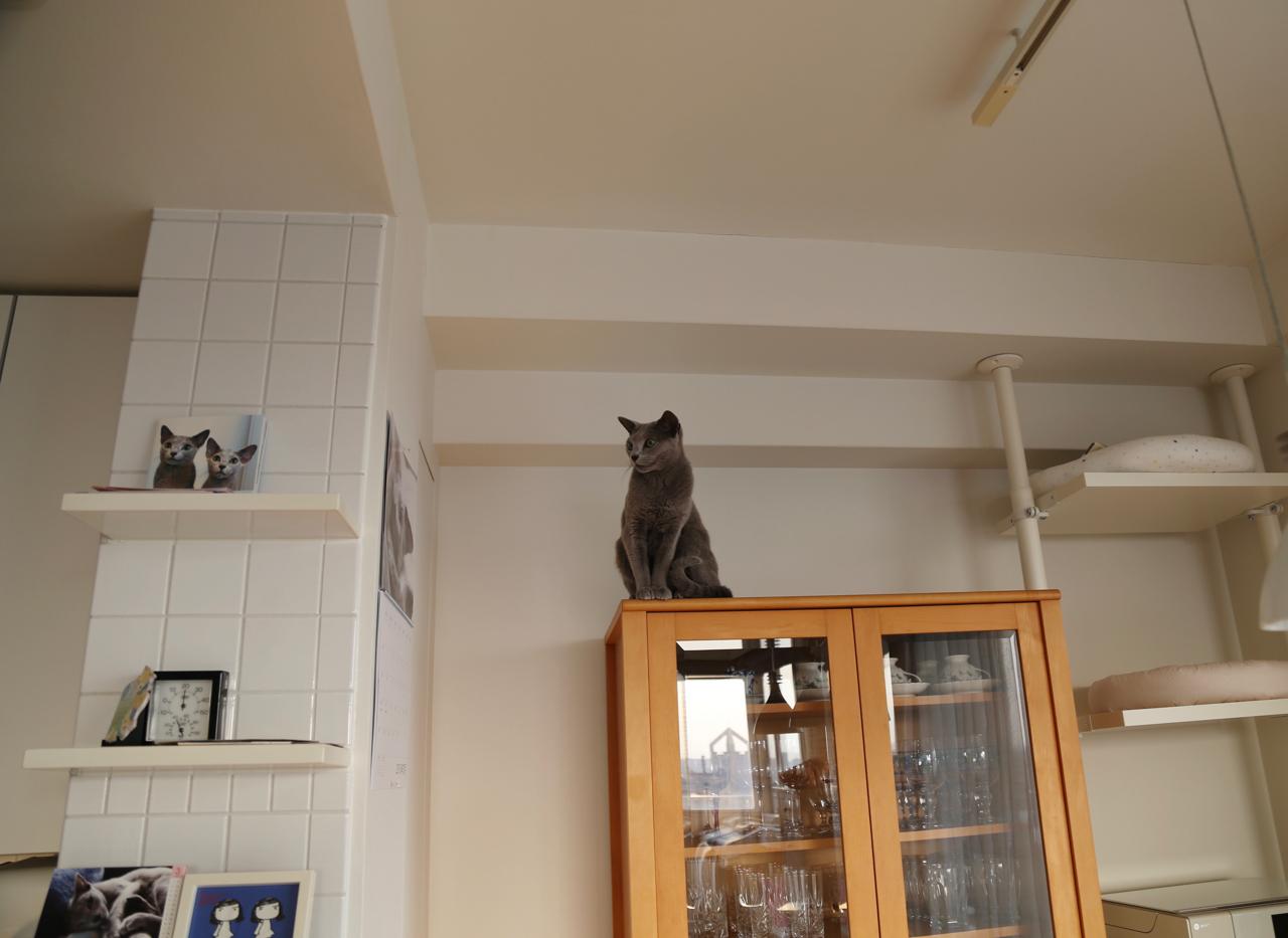 エマ食器棚上