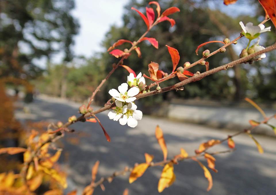 yuki_yanagi_544.jpg