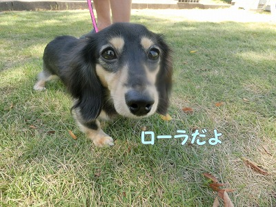 s-tayori160122-CIMG0545
