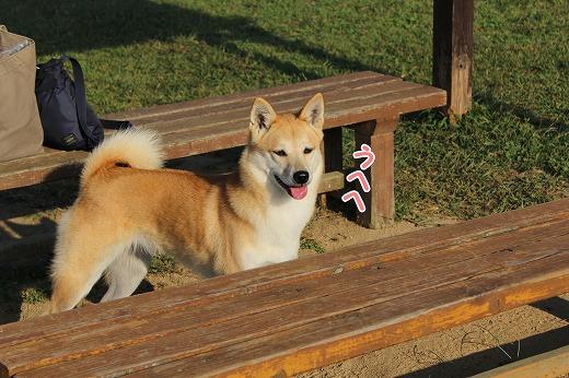 s-dogrun160208-IMG_9510