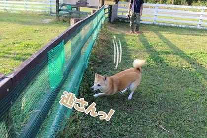 s-dogrun160206-IMG_9506