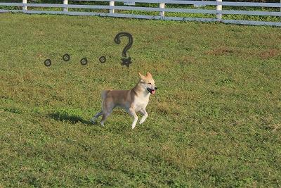 s-dogrun160213-2IMG_9571