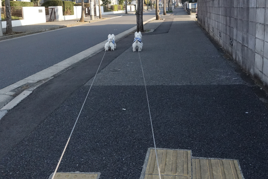 yoppodokusakattanodarou3.jpg