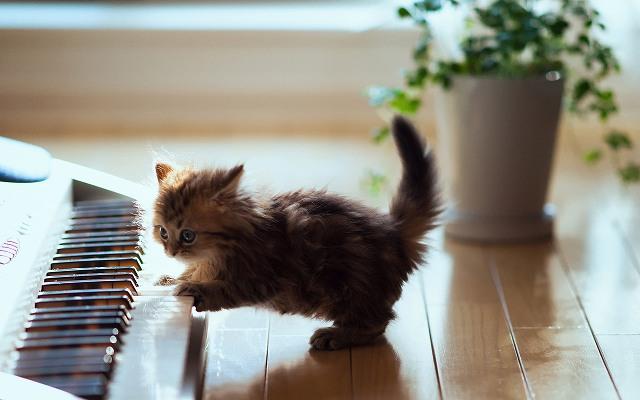 6954138-cute-kitten-playing-piano.jpg