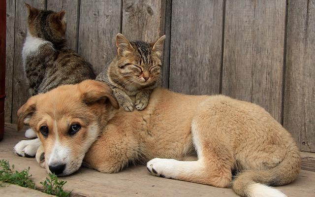 cat-sleeping-on-a-puppy-46253-1920x1200.jpg
