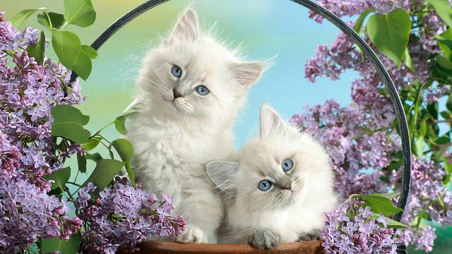 little-beauties-52817.jpg