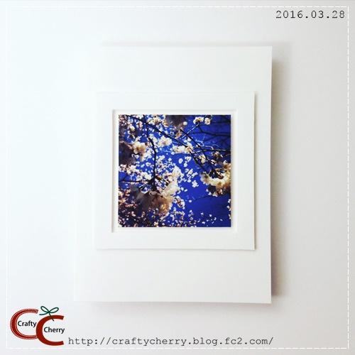 20160328_photosakura.jpg