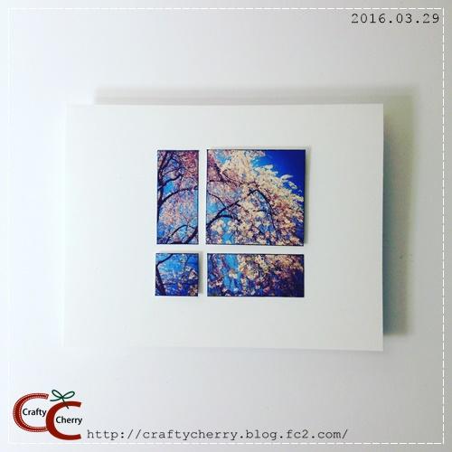 20160329_photosakura2.jpg