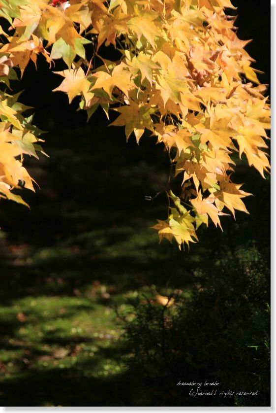 09写真講座 富士浅間神社 113 zzz