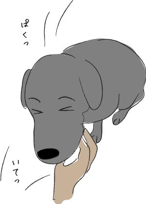 指をかむ犬