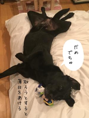 熟睡中の犬02