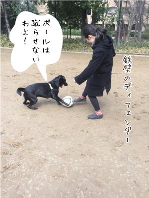 サッカーをする犬01