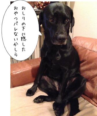 ソファに座る犬