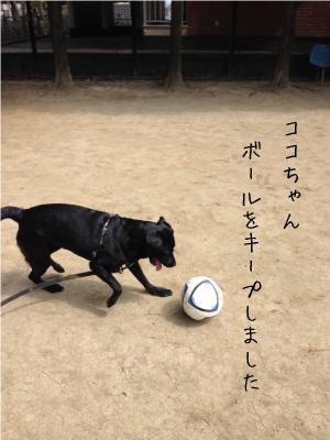 サッカーする犬01