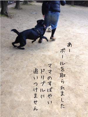 サッカーする犬02