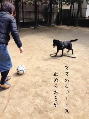 サッカーする犬03