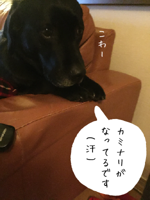 カミナリが怖い犬01