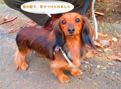 2015-11-showakinen48.jpg