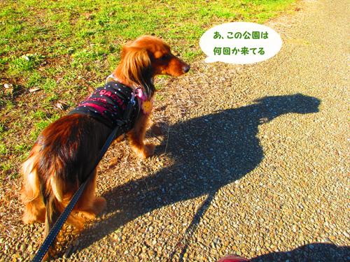 2016-01-satoyama2.jpg