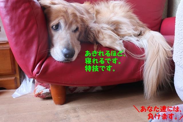 IMG_0115.jpg