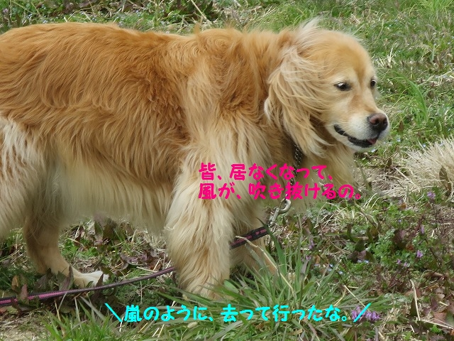 IMG_7790_2016032817153627a.jpg