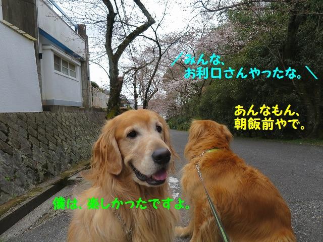 IMG_7807_20160328171616863.jpg