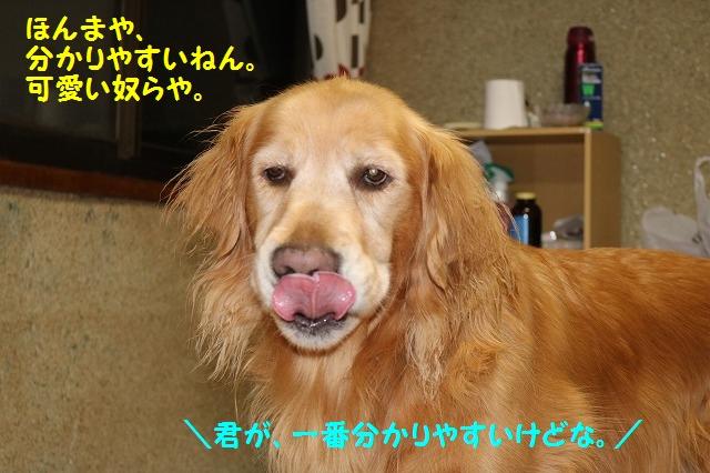 IMG_9006.jpg