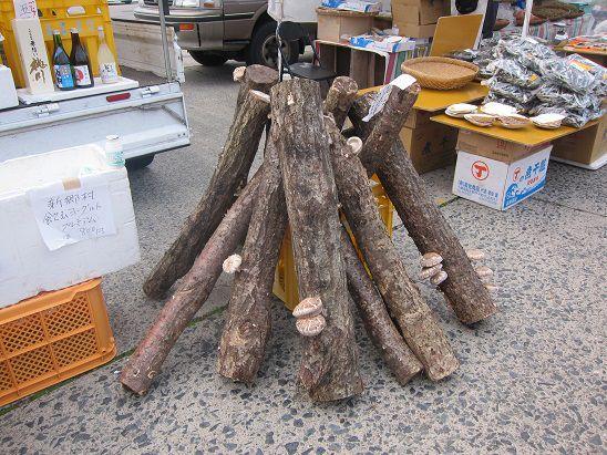 原木しいたけほだ木