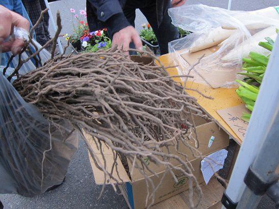 アスパラガスの根