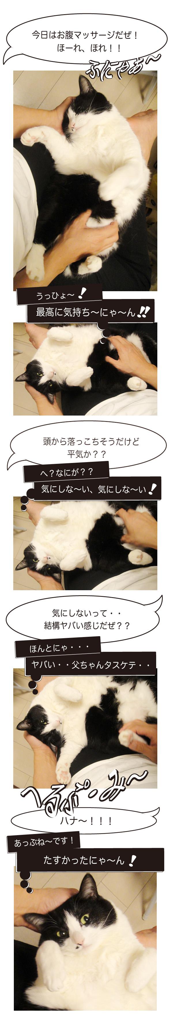 cats20160323.jpg