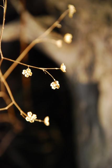 竜ヶ岳_金山尾根_登山道_ドライフラワーのような小さな花