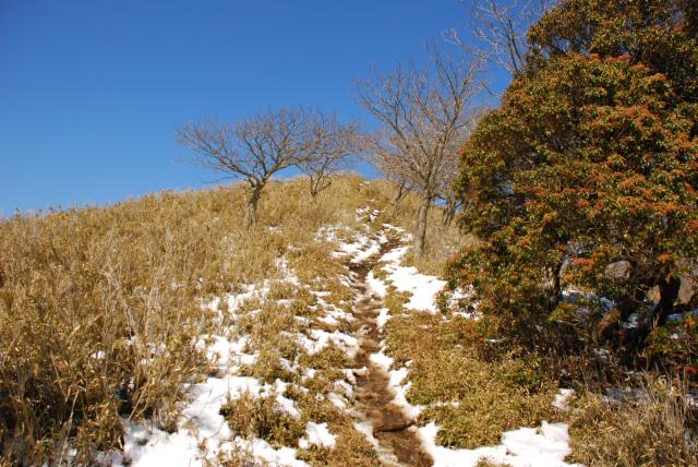 竜ヶ岳_遠足尾根_残雪の登山道_森林限界を超えて笹原へ