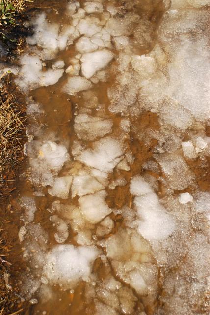 雪融けの登山道_水たまりに浮かぶ氷