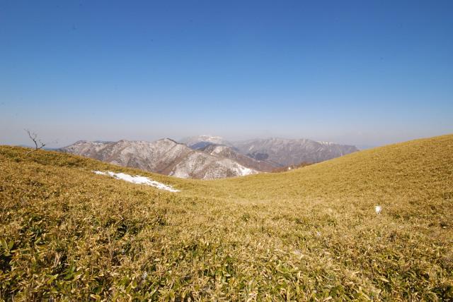 竜ヶ岳から北の眺め_笹原の向こうに雪の峰