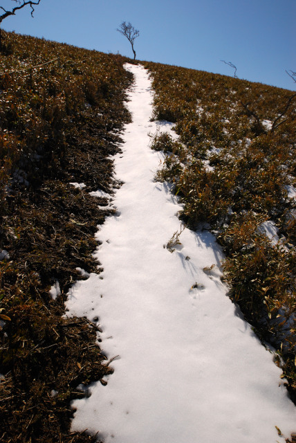 竜ヶ岳の山頂へ一直線_雪の道