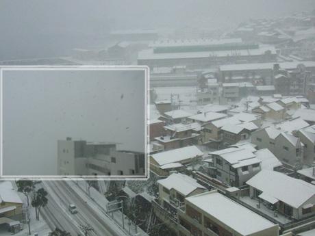 何十年かぶりの大雪です⛄