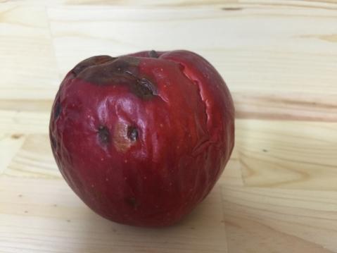 工藤さんのリンゴ (1000x750)