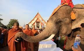 elephant day (2)