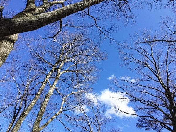 冬枝のクヌギ