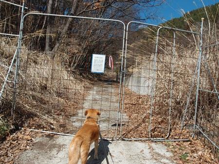 獣害防止柵