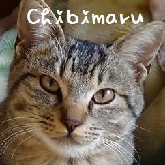 chibimaru.jpg