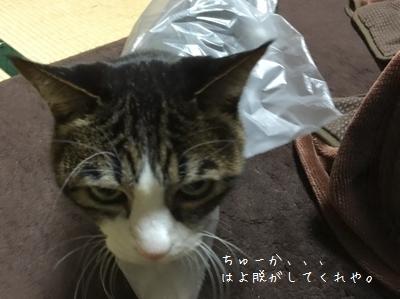 ファンションリーダー銀②