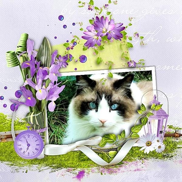 loonapix_1459259929177129359.jpg