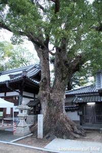 鋸尾八幡神社(堺市西区津久野町)5