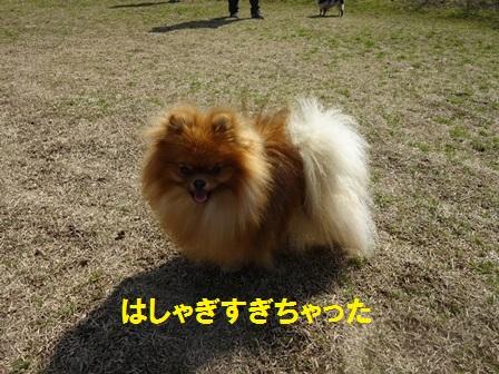 20160302094646049.jpg