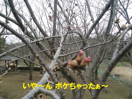 201603261441529d2.jpg